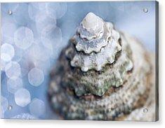 Seashell Acrylic Print by Lauren Tolbert Miller