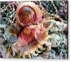 Seashell Reflections Acrylic Print by Shirley Sirois