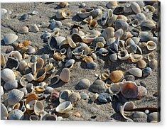 Seashells In The Sand Acrylic Print by Brenda Thimlar
