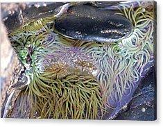 Seashore Rock Pool Acrylic Print by Dr Keith Wheeler