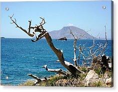 Seaside Tree Acrylic Print by Phoenix Michael  Davis