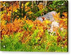 Seasonal Change Acrylic Print by George Ramondo