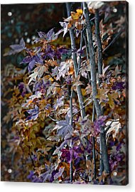 Seasonal Changes Acrylic Print by Michael Putnam