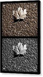 Seasons Of Change Acrylic Print by Luke Moore