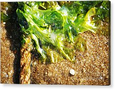 Seaweed And Rope Acrylic Print by HD Connelly