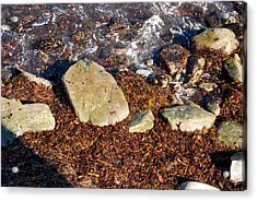 Seaweed By The Shore Acrylic Print