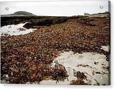 Seaweed Covered Beach Acrylic Print by Dr Keith Wheeler