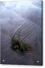 Acrylic Print featuring the photograph Seaweed Delivery by Peter Mooyman