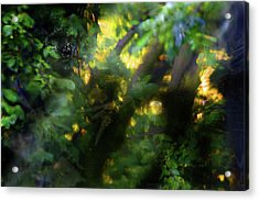Secret Forest Acrylic Print by Richard Piper