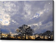 Sedgeley Tree Acrylic Print by Andrew Dinh