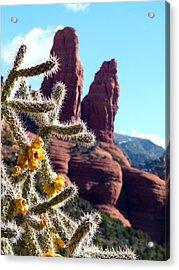 Sedona Flowering Cholla Acrylic Print by Cindy Wright