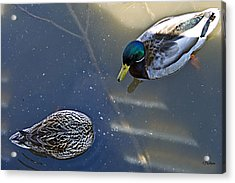 See Anything Acrylic Print by Kat Besthorn