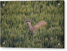 See Me? Acrylic Print by Melissa  Maderos