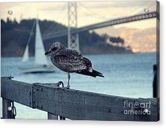 Seegull At The Bay Bridge San Francisco Acrylic Print