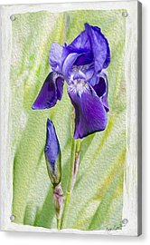 Seeing Purple Acrylic Print
