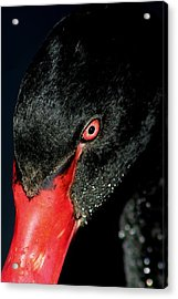 Seeing Red Acrylic Print by Paulette Thomas