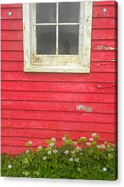 Seeing Red Acrylic Print by Peggy  McDonald