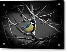 Selective Bird Acrylic Print by Chris Boulton