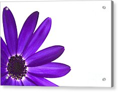 Senetti Deep Blue Acrylic Print by Richard Thomas