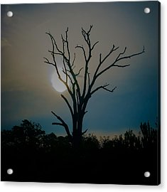 Sentinal At Sunrise Acrylic Print