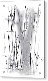 Sentinel Shadow Acrylic Print