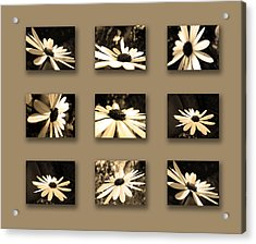 Sepia Daisy Flower Series Acrylic Print by Sumit Mehndiratta