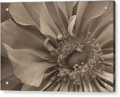 Sepia Floral Acrylic Print by Kristin Elmquist