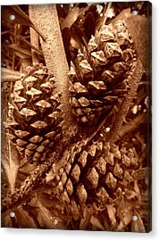 Acrylic Print featuring the photograph Sepia Pine Cones Trio by Cindy Wright