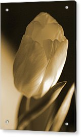 Sepia Tulip Acrylic Print by Peg Toliver
