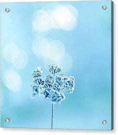 September Frost Acrylic Print by Alexandre Fundone