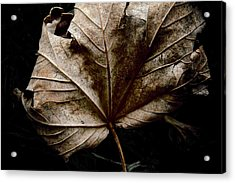 September Acrylic Print by Odd Jeppesen
