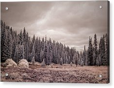 Acrylic Print featuring the photograph Sequoia by Mike Irwin