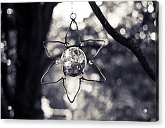Acrylic Print featuring the photograph Serendipity by Sara Frank