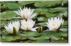 Acrylic Print featuring the photograph Serenity  by Bruce Bley