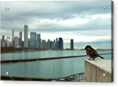 Serenity Of Chicago Acrylic Print