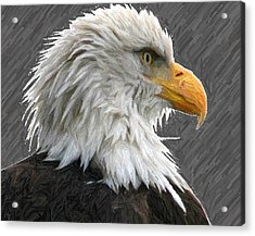 Serious Eagle Acrylic Print by Carrie OBrien Sibley