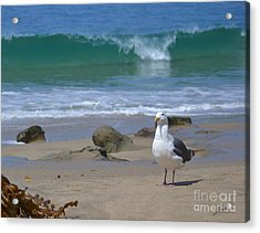 Seriously Acrylic Print by Suzette Kallen