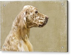 Setter 2 Acrylic Print by Rebecca Cozart