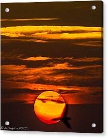 Setting Sun Flyby Acrylic Print by Shannon Harrington