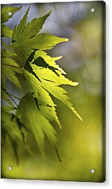 Acrylic Print featuring the photograph Shades Of Green And Gold. by Clare Bambers
