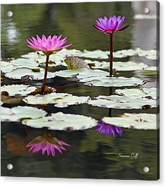 Shades Of Purple  Acrylic Print by Suzanne Gaff