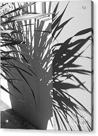 Shadow #1 Acrylic Print by Rob Ladely