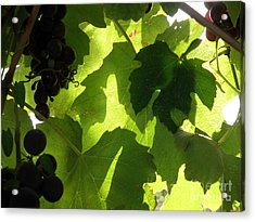 Acrylic Print featuring the photograph Shadow Dancing Grapes by Lainie Wrightson