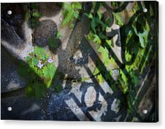 Acrylic Print featuring the photograph Shadow Garden by Richard Piper