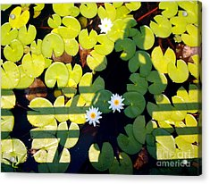 Acrylic Print featuring the painting Shadow Lilies by Gretchen Allen