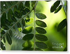 Shadow On Leaf -5 Acrylic Print