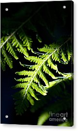 Shadow On Leaf -7 Acrylic Print