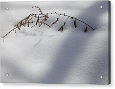 Shadow On Snow 2 Acrylic Print