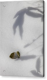 Shadow On Snow Acrylic Print