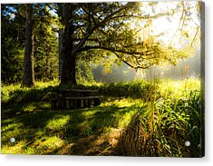 Acrylic Print featuring the photograph Shadowplay by Randy Wood